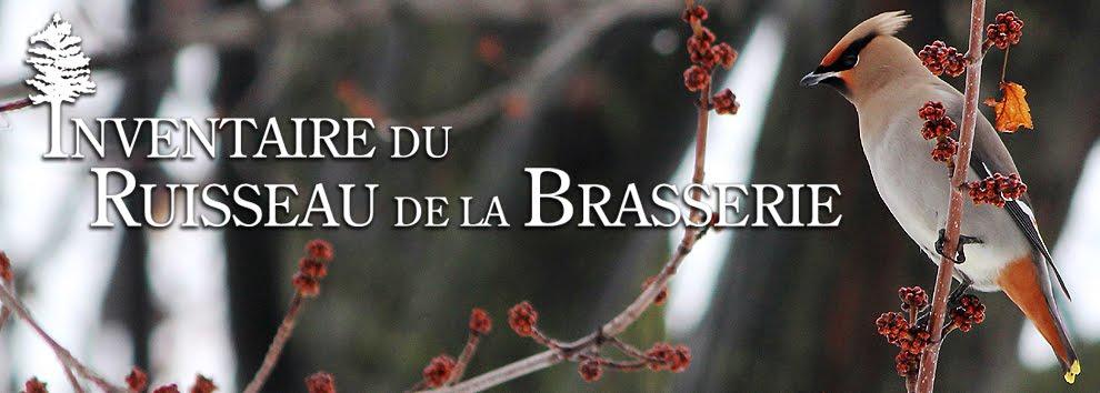 Inventaire du ruisseau de la Brasserie