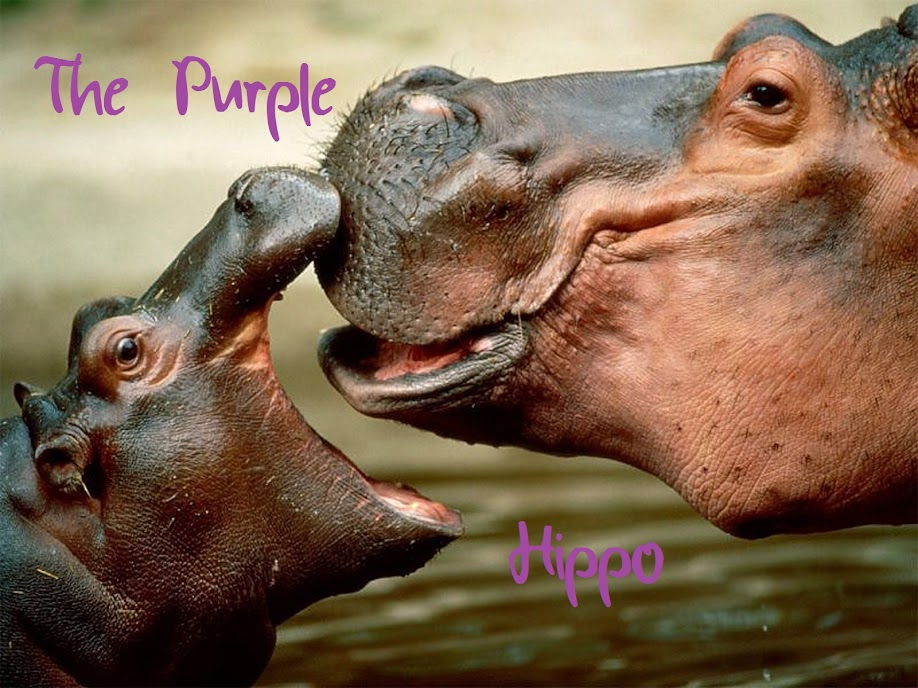 The Purple Hippo