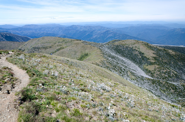descending Mt Feathertop on path