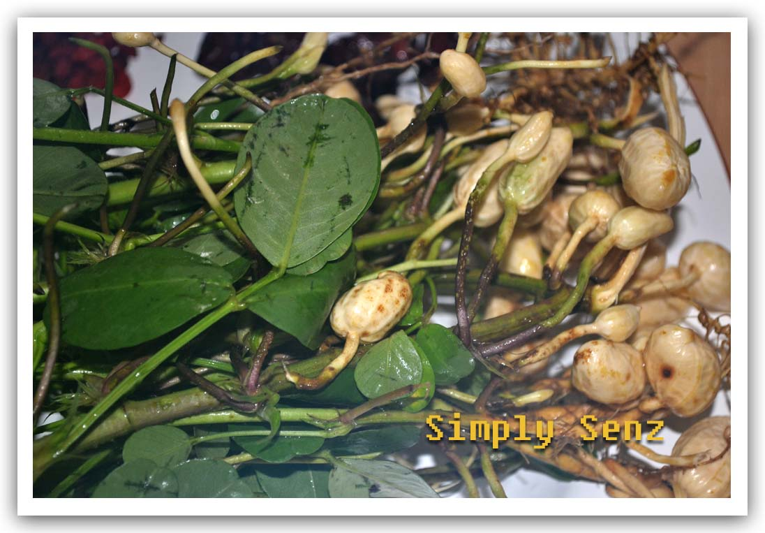 Chinese cancer cure herbs - Anti Depressant Anti Cancer Peanut Root Herbal Soup