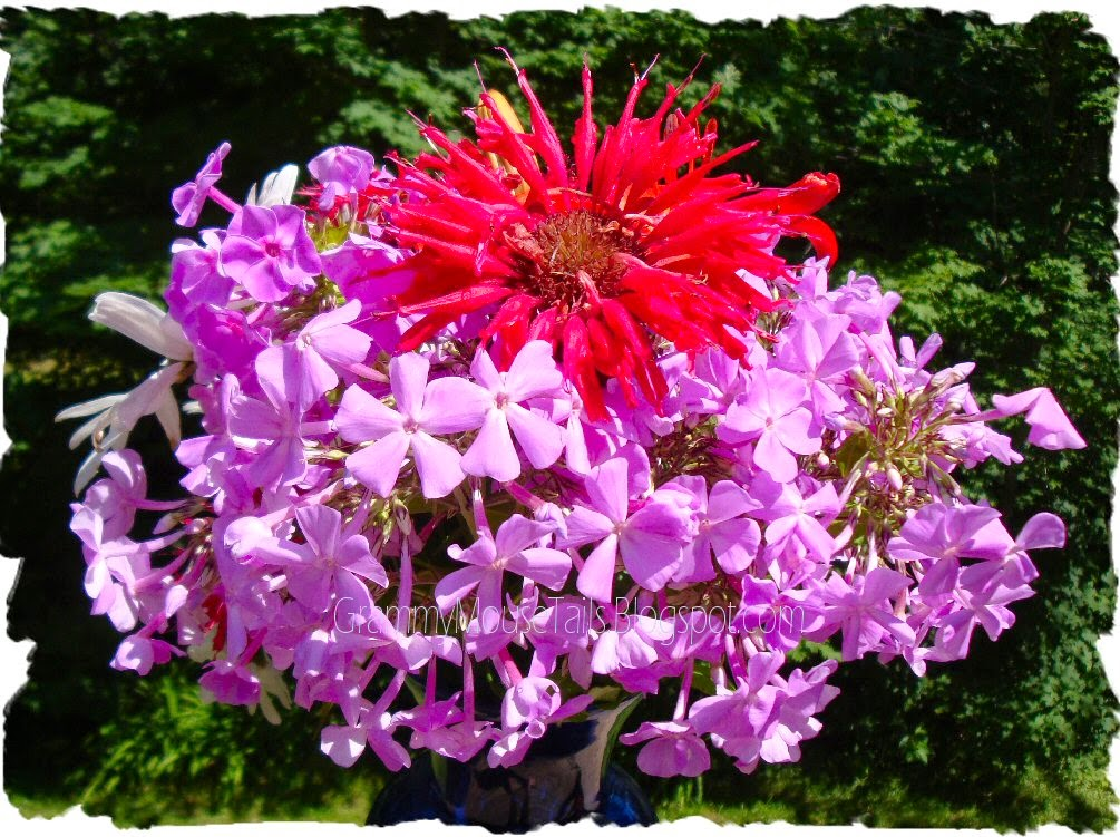 cut garden flowers - red bee balm - phlox photo image