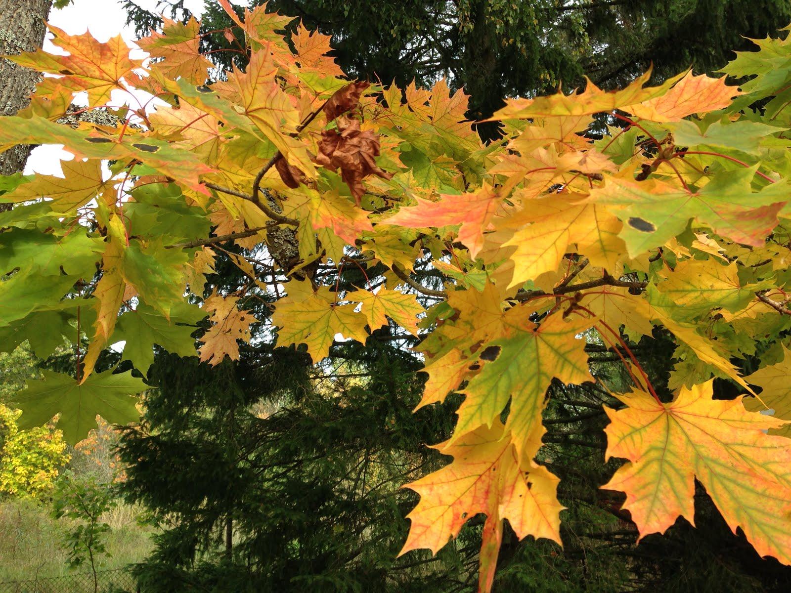 Den vackra hösten