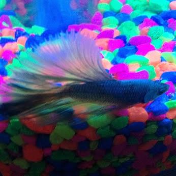 Animal jam spirit blog help bonsaii name her fish for What fish has eyelids