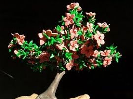 Bonsai (click pentru detalii)