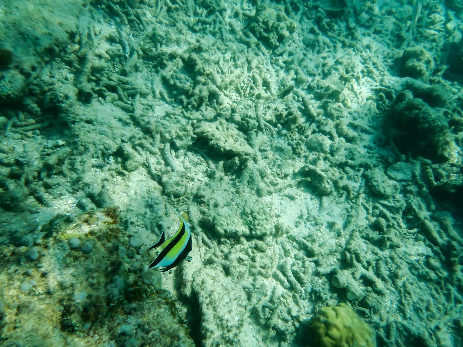 snorkelingen gili air