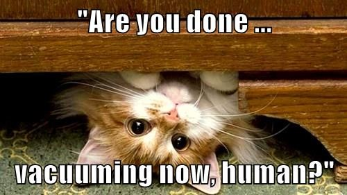 Funny Meme June 2015 : Socrates book reviews cat thursday june th
