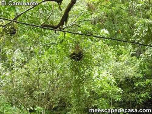 Planta con raíces aéreas en el Centro Turístico Naciente del Río Tioyacu (Rioja, Perú)