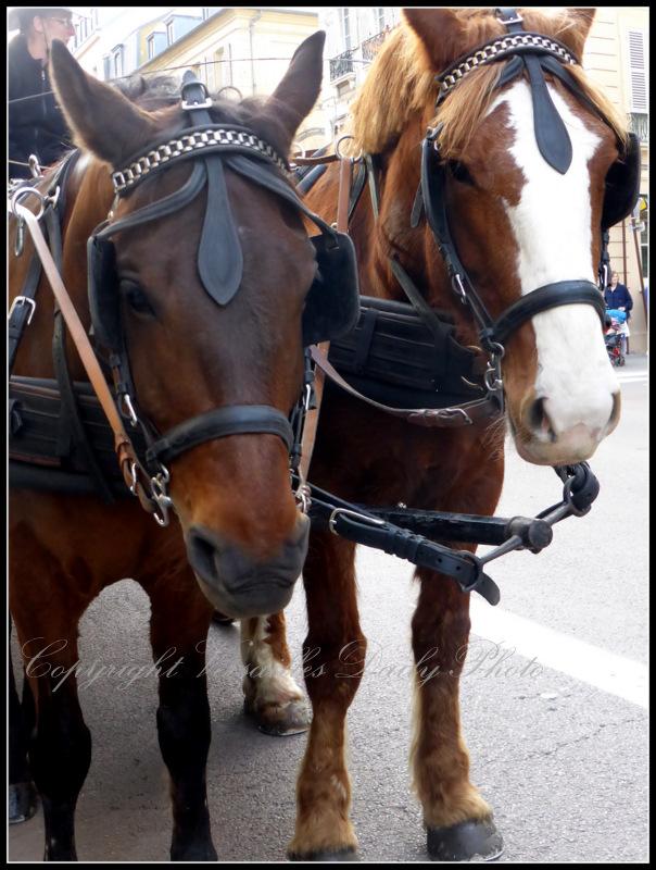 Horses Bio C Bon Versailles Richaud