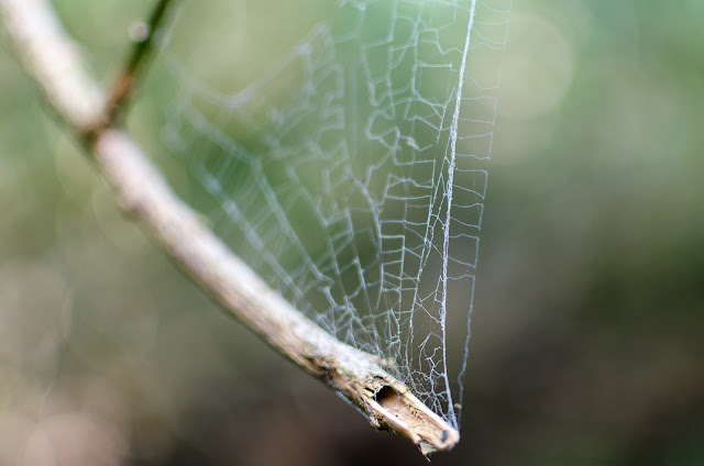spider web and branch