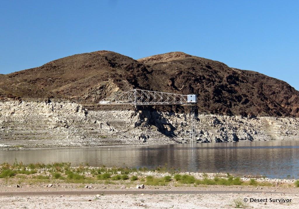Desert Survivor Lake Mead National Recreation Area