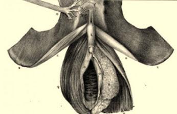 Autrefois : presque rien et presque tout sur le clitoris !