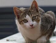 Aiutiamo questa colonia di gatti
