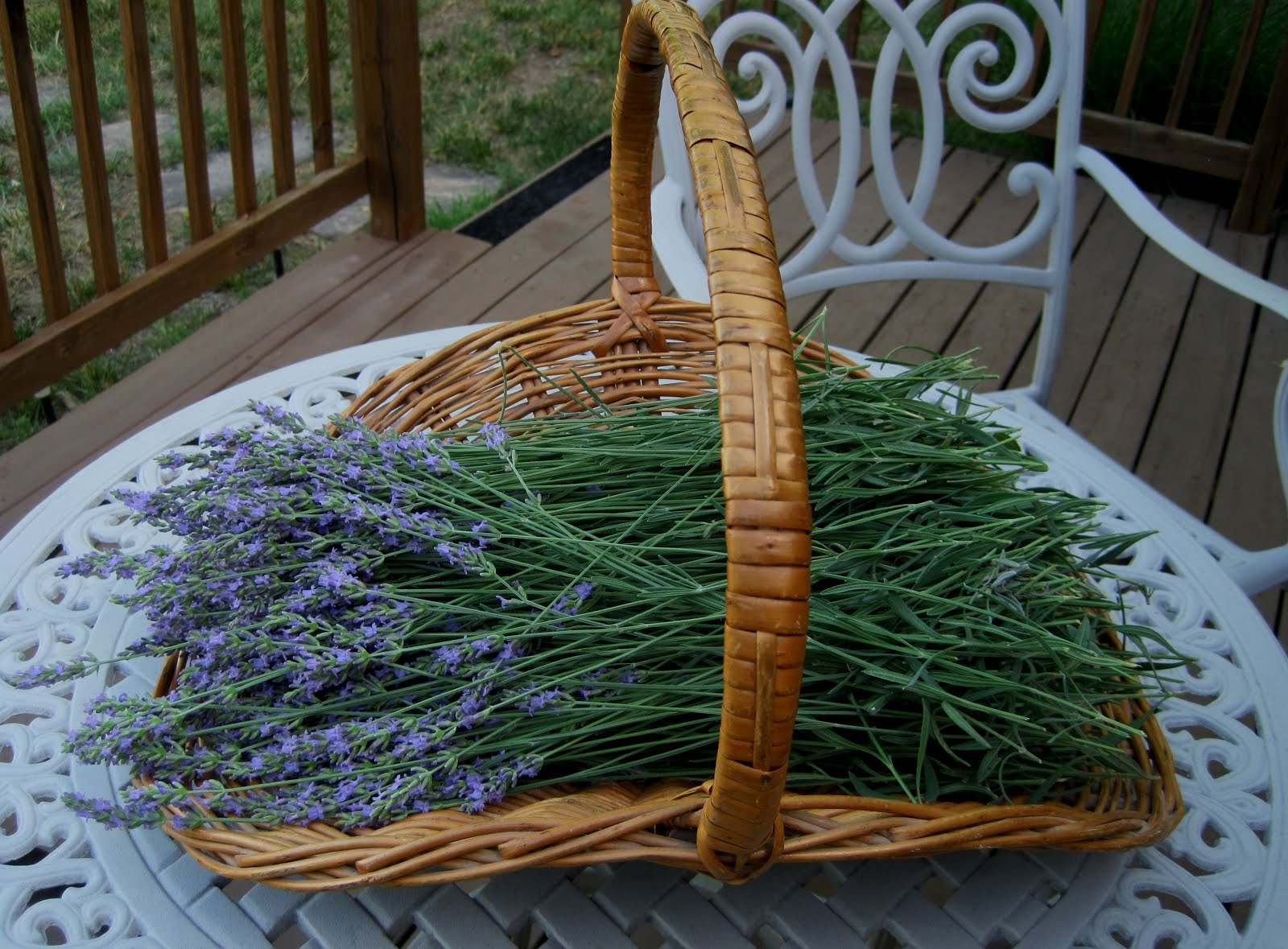 Lavender Harvest. . .