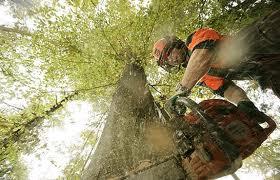 Penebangan hutan untuk pembukaan lahan
