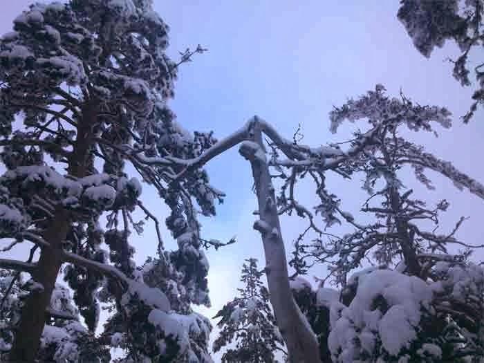 Navacerrada con nieve
