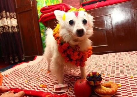 Kukur (dog) Tihar or Kukur Puja