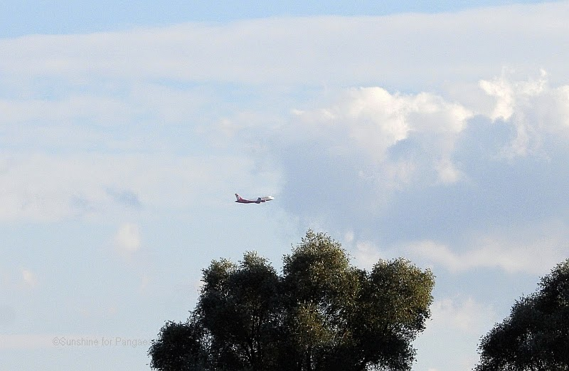 A starting airplane over trees