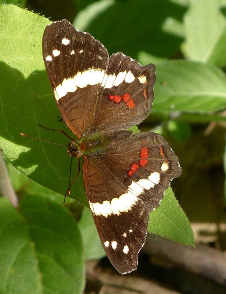 Teaching Kids About Butterflies   Study.com