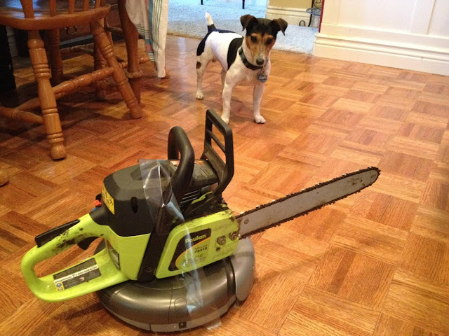 funny animal pictures, dog and vacuum cleaner