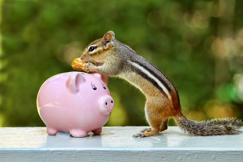 chipmunks, bank, piggy bank