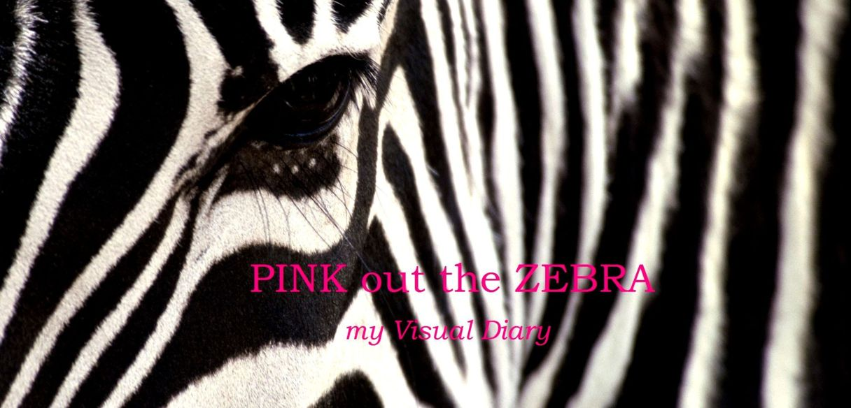 PINK out the ZEBRA
