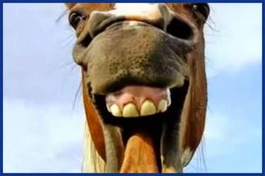 Tiere, Witzige Bilder auf topster  - lustige tierbilder bilder