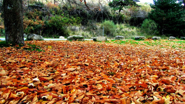 La Panera en Otoño - San Rafael