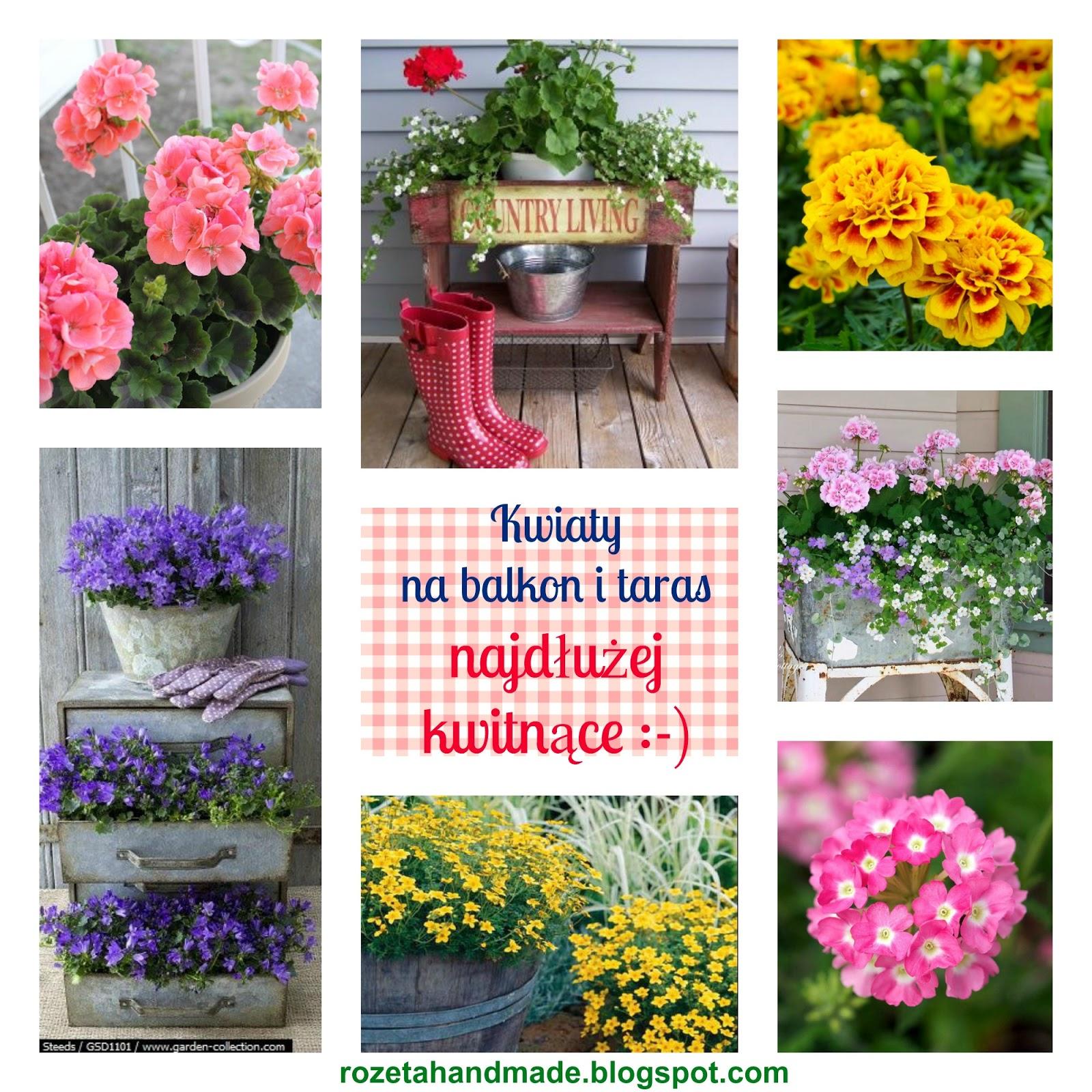 Jakie Kwiaty Posadzic W Maju By Kwitly Do Poznej Jesieni Czyli Kwiaty Na Balkon I Taras Najdluzej Kwitnace D Rozeta By Ewa Stopka