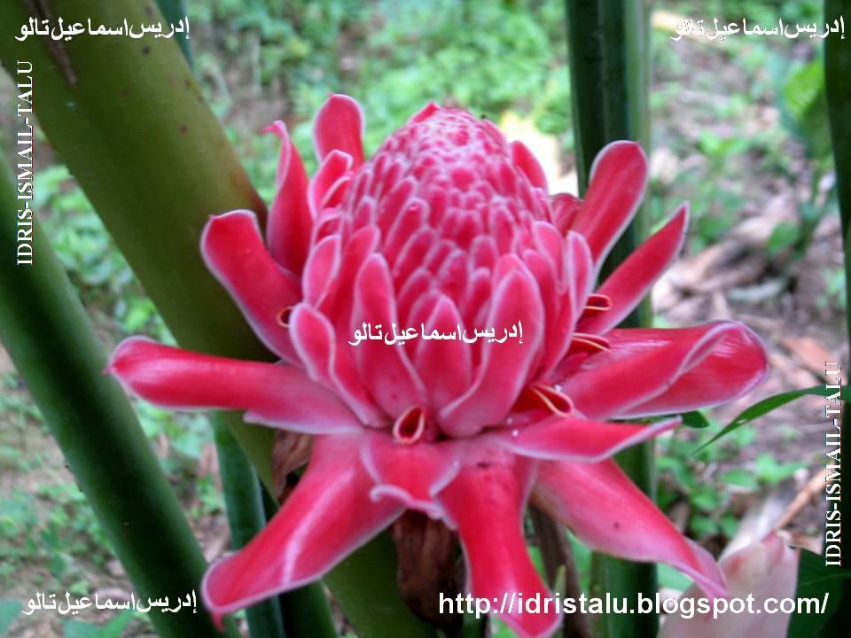 Idristalu September 2011 Newhairstylesformen2014 Com