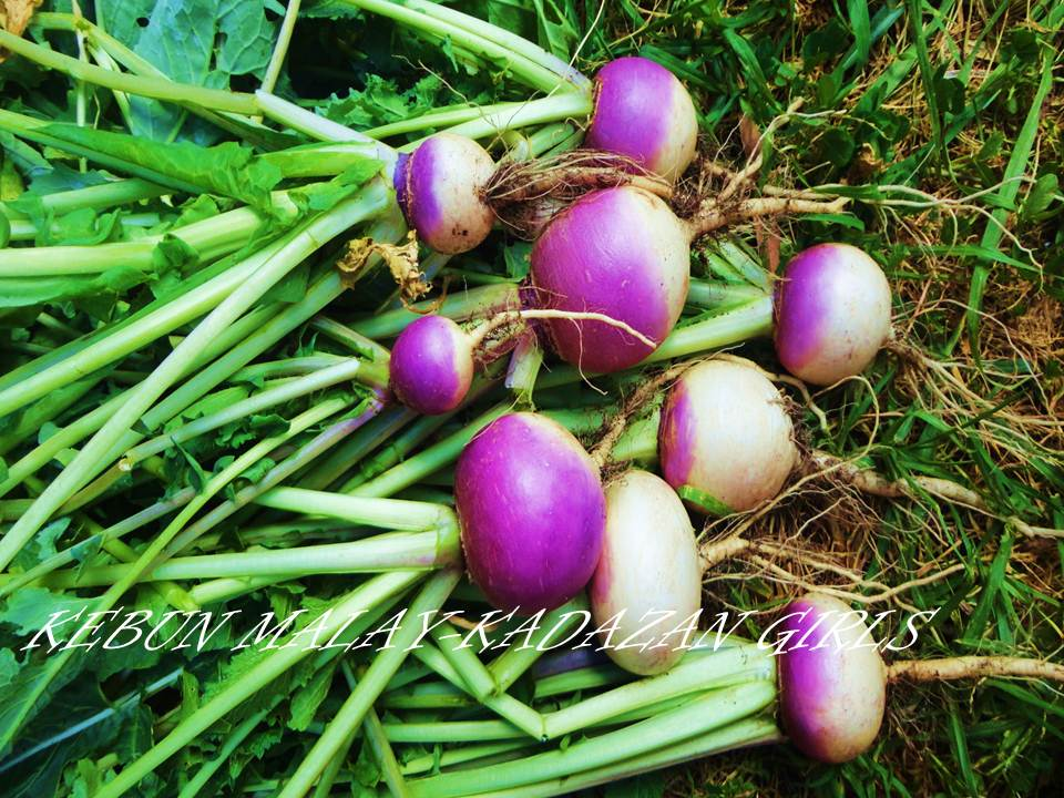 how to cook purple top turnips