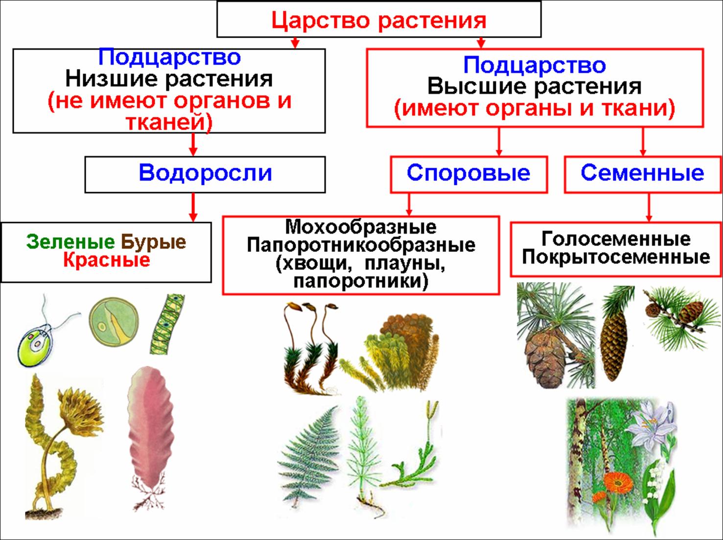 презентация для 7 класса царство животные