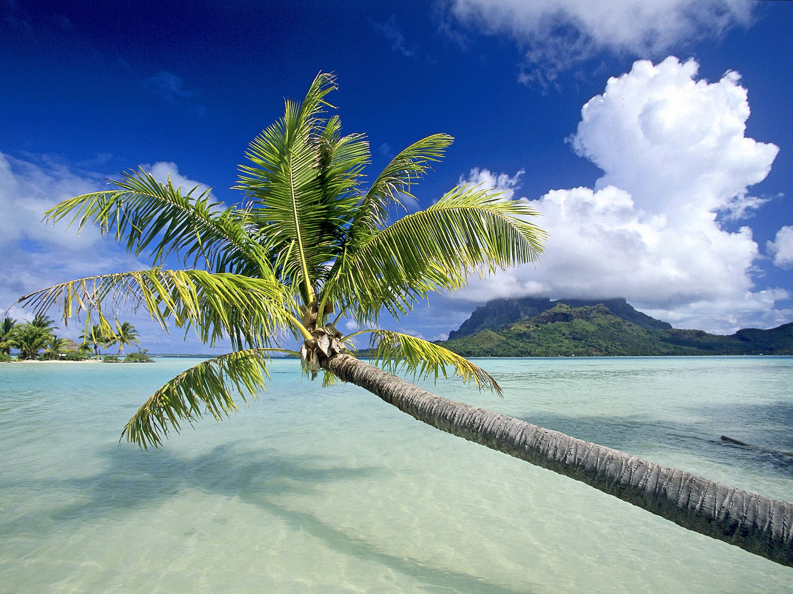 Tropical island pictures free