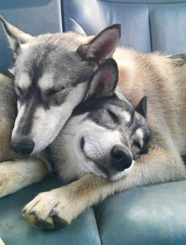 Cute dogs - part 106, funny dog photos, best cute dogs, dog pictures