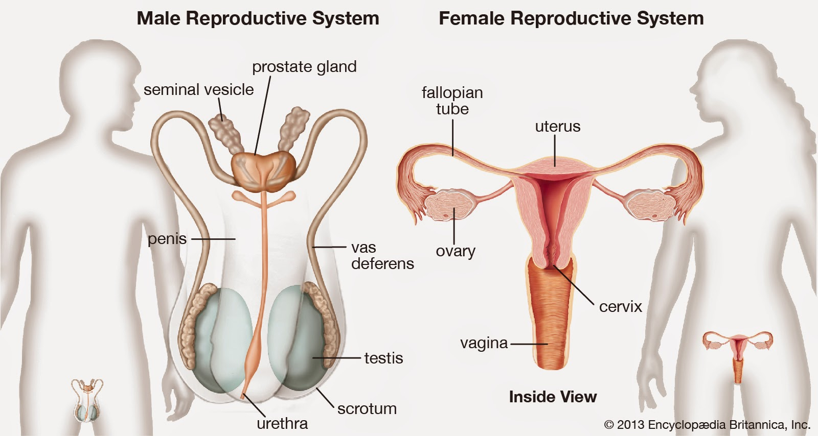 Aula Ecoplanet Reproductive System