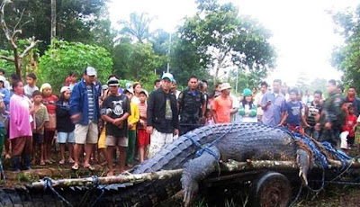 Buaya Terbesar di Dunia Guinness World of Records