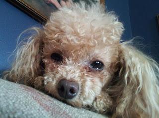 Sinais de doença no cachorro