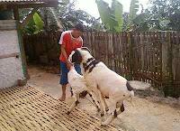 LEADERSHIP (Bapak, Anak dan Gembala)