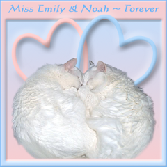 Miss Emily and Noah RIP