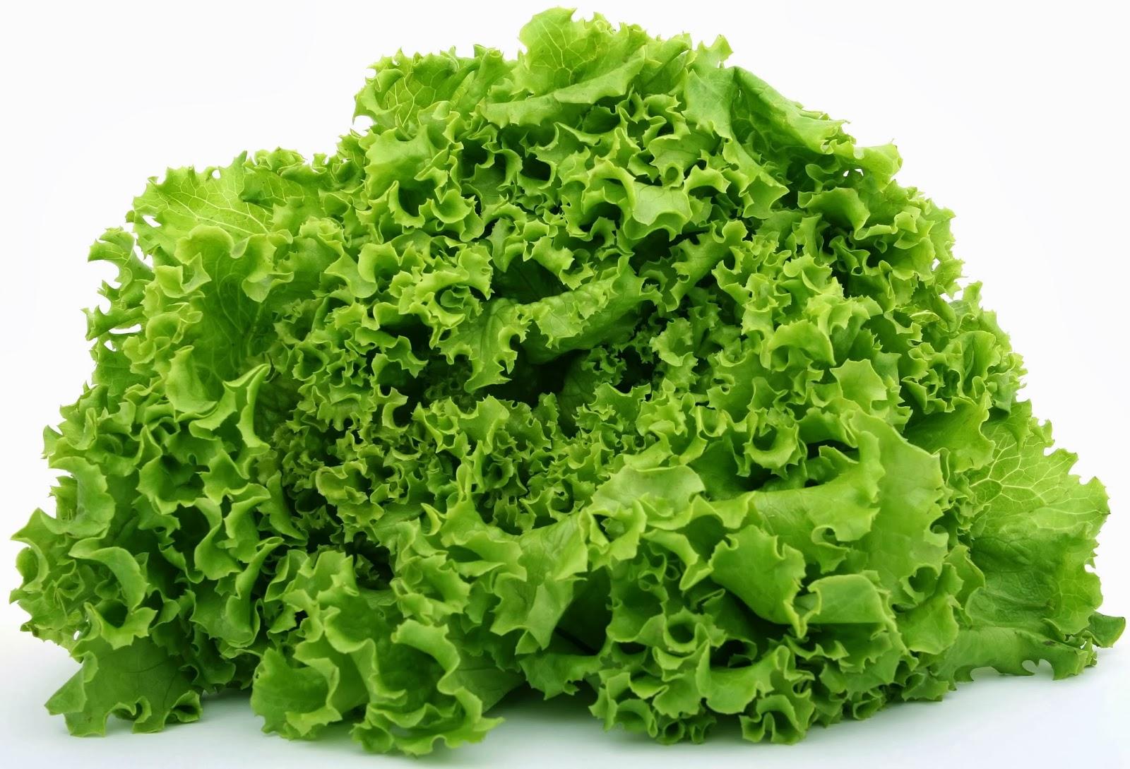 is-pre-washed-salad-safe