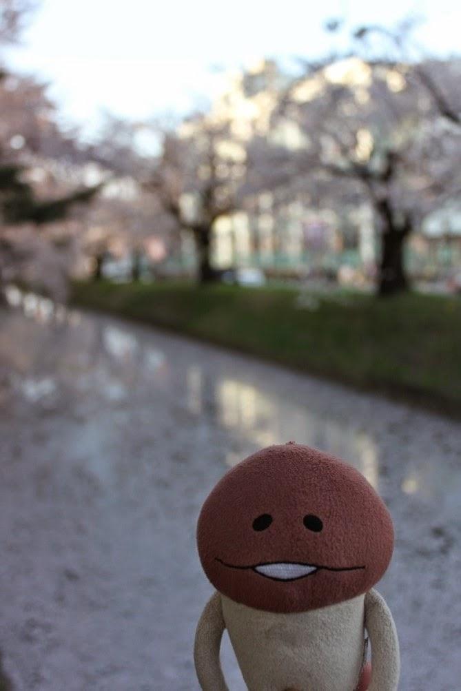 Hirosaki Castle Park Outer Moat 弘前公園 外濠