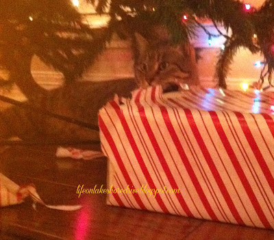my cat unwrapping present