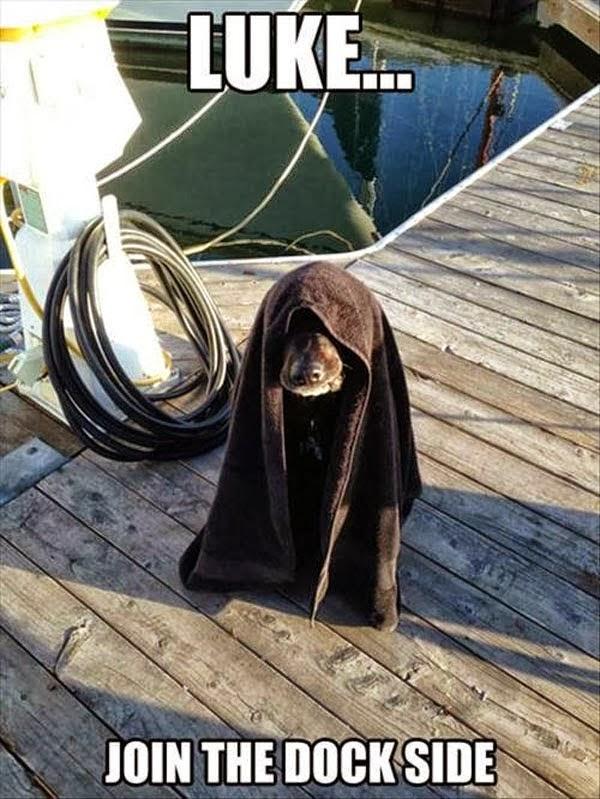 Funny Dog Looks Like OB1 Kenobi.