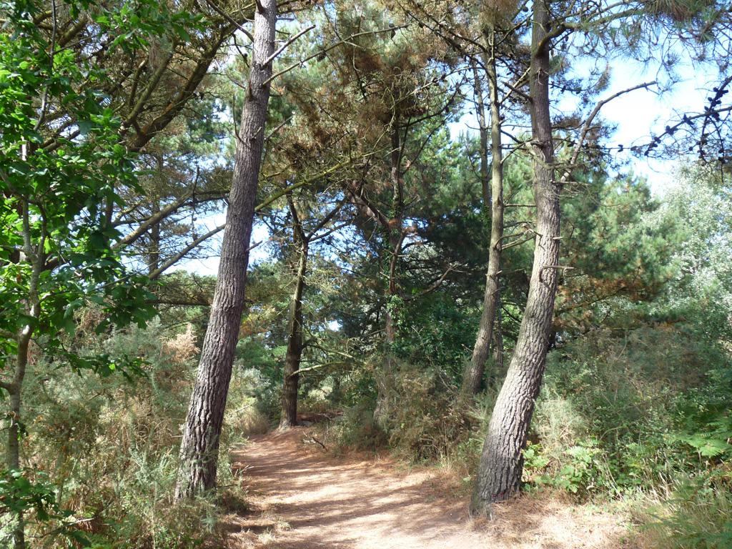 ブルターニュ トレガステル Trégastel  GR34 ハイキング