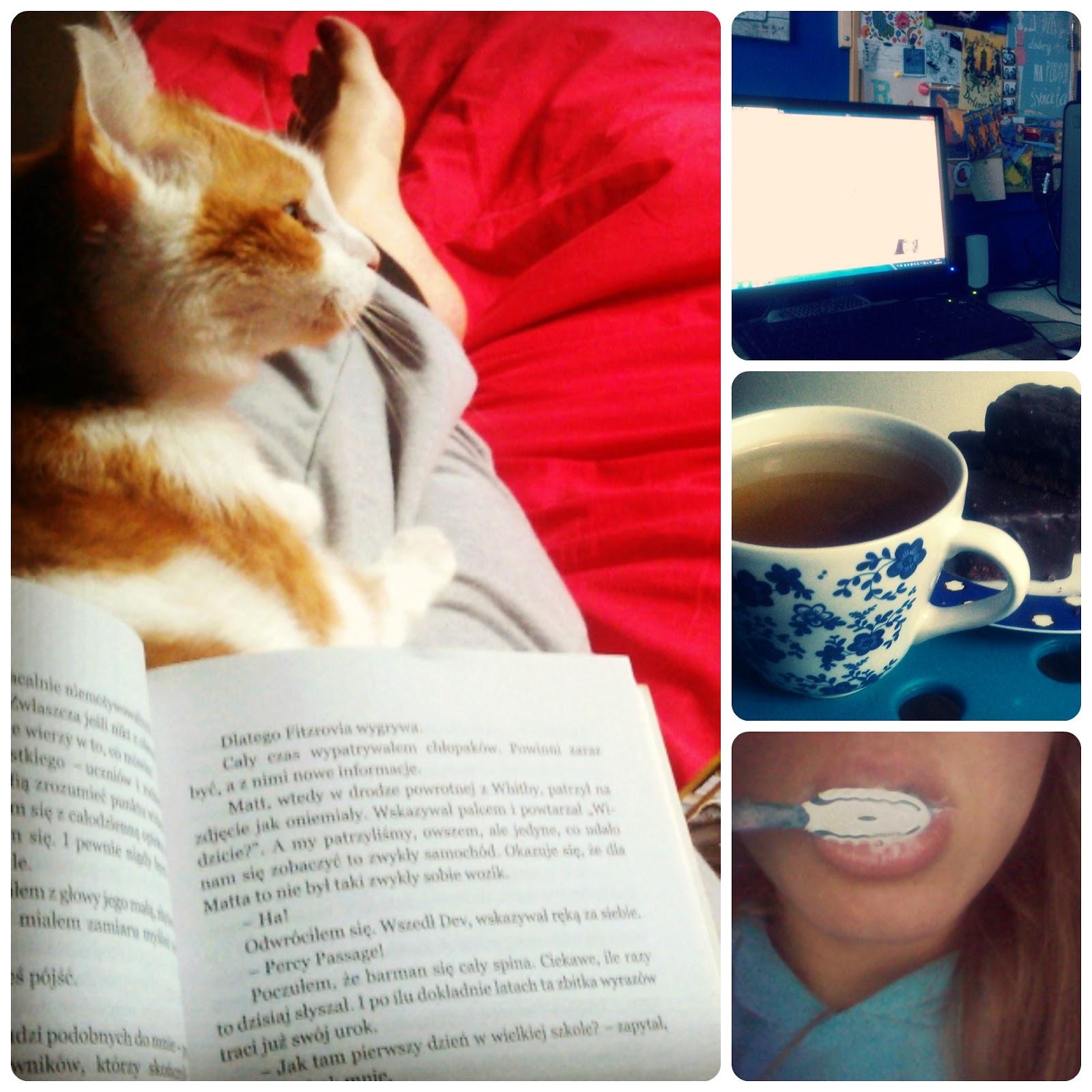 Kot, książka, zielona herbata, komputer, coś słodkiego, pasta i szczoteczka.