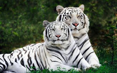 Animals HD Wallpapers, Desktop Wallpapers