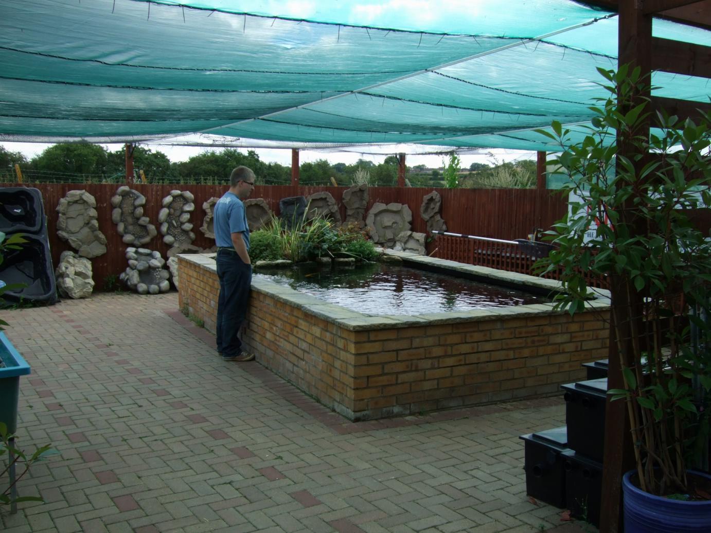 Alternative eden exotic garden the pond that spawned the for Pond veggie filter