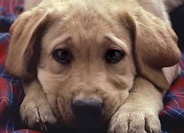 Ενεργοποιείται ο Δήμος Τριφυλίας για την στείρωση αδέσποτων ζώων