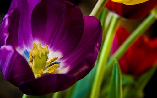 Flores para todas las mujeres (7 postales)
