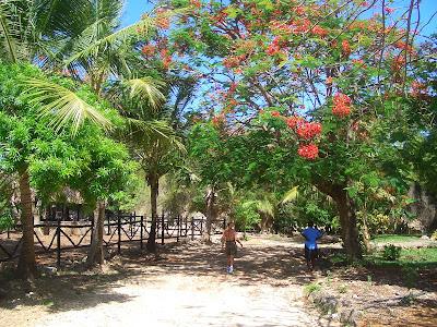 (Kenya) - Mombasa - Mamba Village