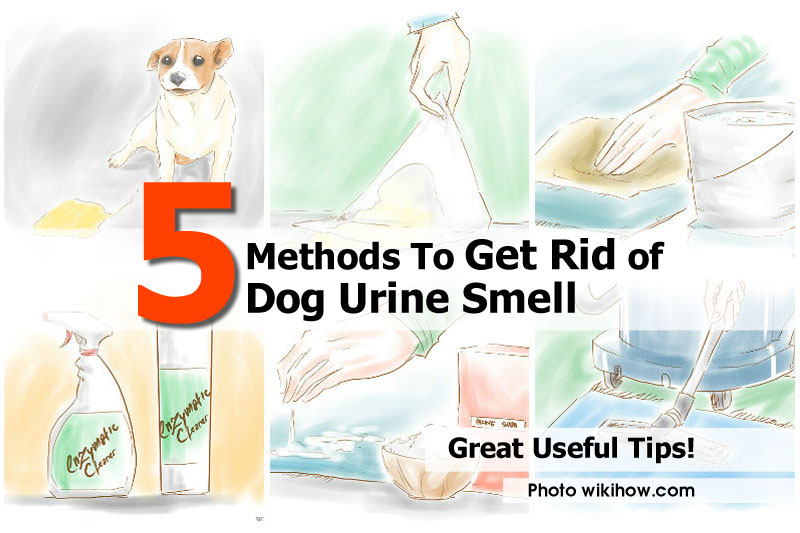 How to get rid of dog urine smell idees and solutions How to get rid of shower smell